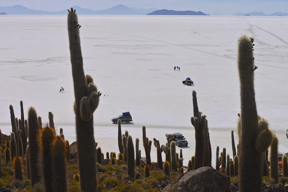 Salar de Uyuni Bolivien - Kakteeninsel Isla Incahuasi