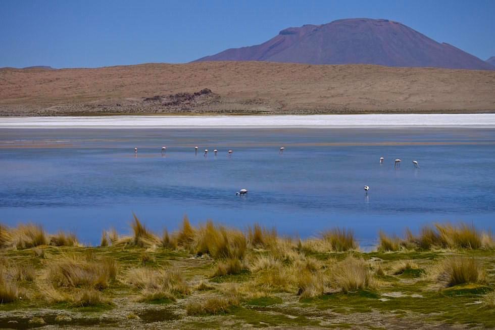 Lagune mit Flamingos - Jeeptour Uyuni in Bolivien