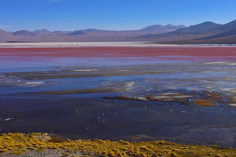 Laguna Colorada oder rote Lagune im Reserva Nacional de Fauna Andína Eduardo Avaroa - Bolivien