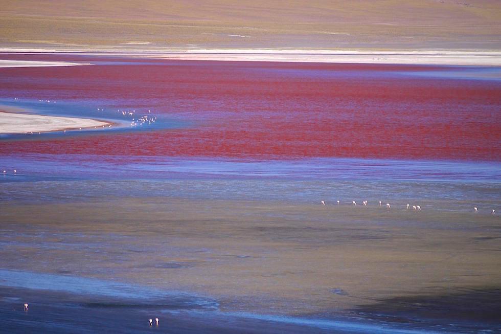Laguna Colorada im Reserva Nacional de Fauna Andína Eduardo Avaroa - Bolivien