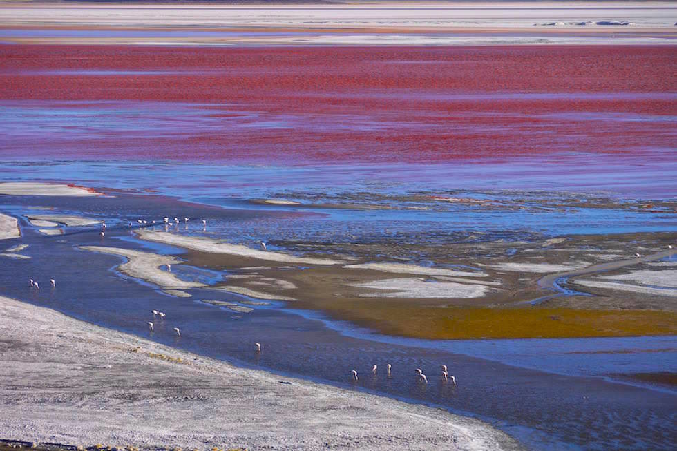 Laguna Colorada im Reserva Nacional de Fauna Andína Eduardo Avaroa - Uyuni Jeep Tour in Bolivien
