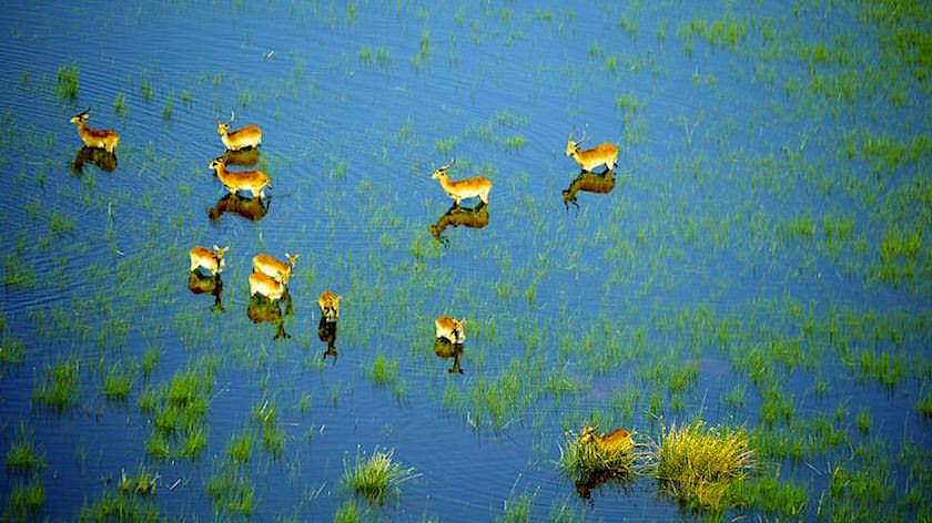 Gazellen Okavango Delta ein Helikopter Flug von Maun, Botswana