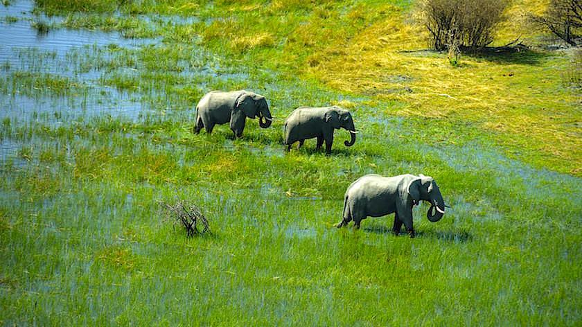 Elefanten Okavango Delta ein Helikopter Flug von Maun, Botswana