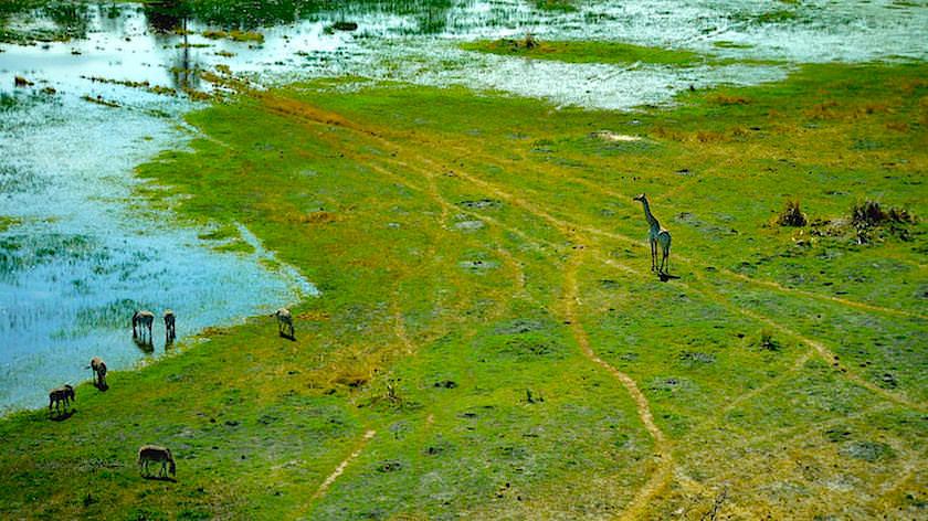 Okavango Delta ein Helikopter Flug von Maun, Botswana