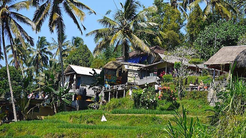 Blick von Tegallalang - Schönste Reisterrassen Bali - Indonesien
