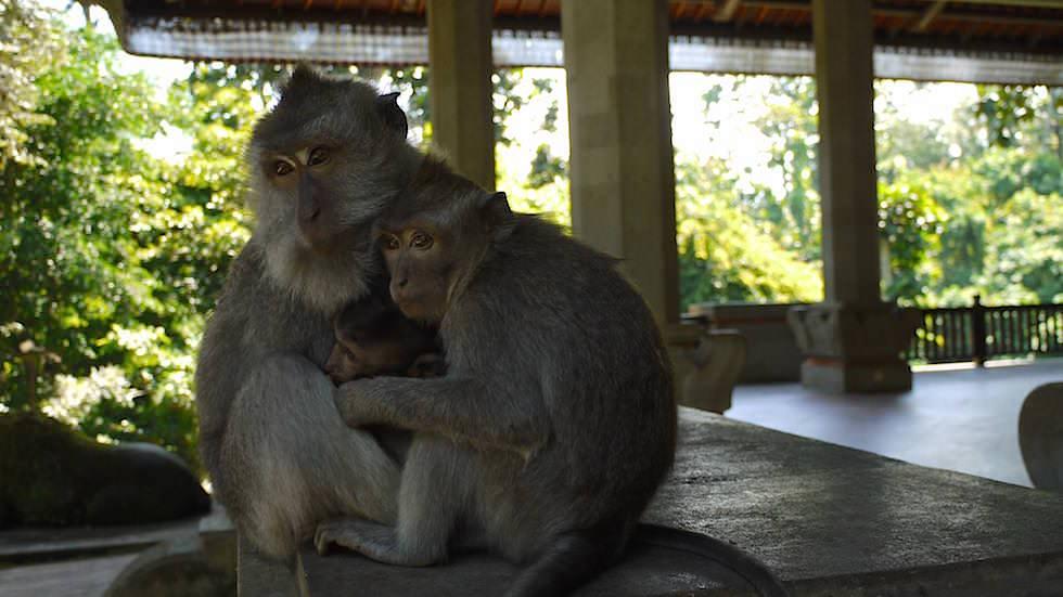 Pura Prajapati Monkey Forest in Ubud, Bali