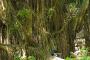 Monkey Forest – Ubud's Heiliger Affenwald, der Tempel des Todes, die Drachenbrücke & die Heilige Quelle