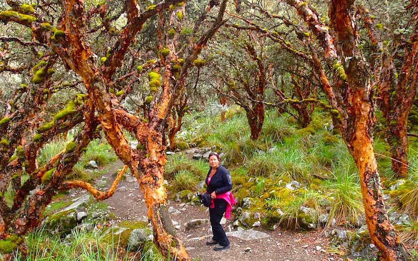 Auf dem Weg zur Laguna 69 - Lake 69 - Nationalpark Huascaran bei Huaraz in Peru