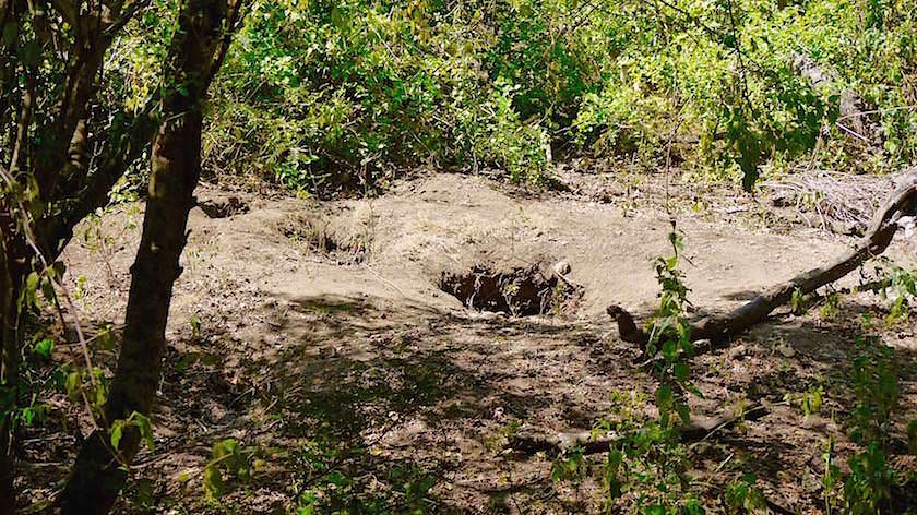 Brutstätten der Komodo Warane Rinca Island