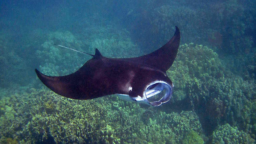 Manta Point Komodo National Park Indonesien