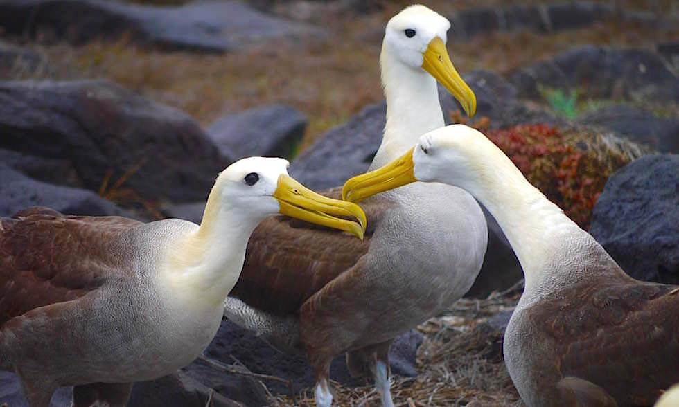 Albatross Airport auf  Espanola Island - Suarez Point- Galapagos Inseln Ecuador