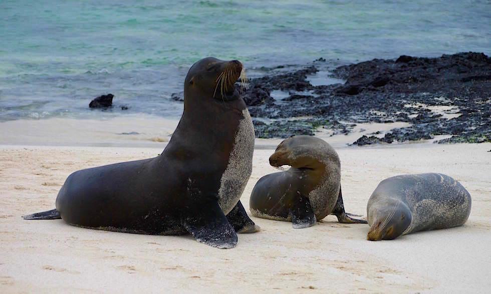 Gardner Bay - Isla Espanola - Galapagos Inseln Ecuador