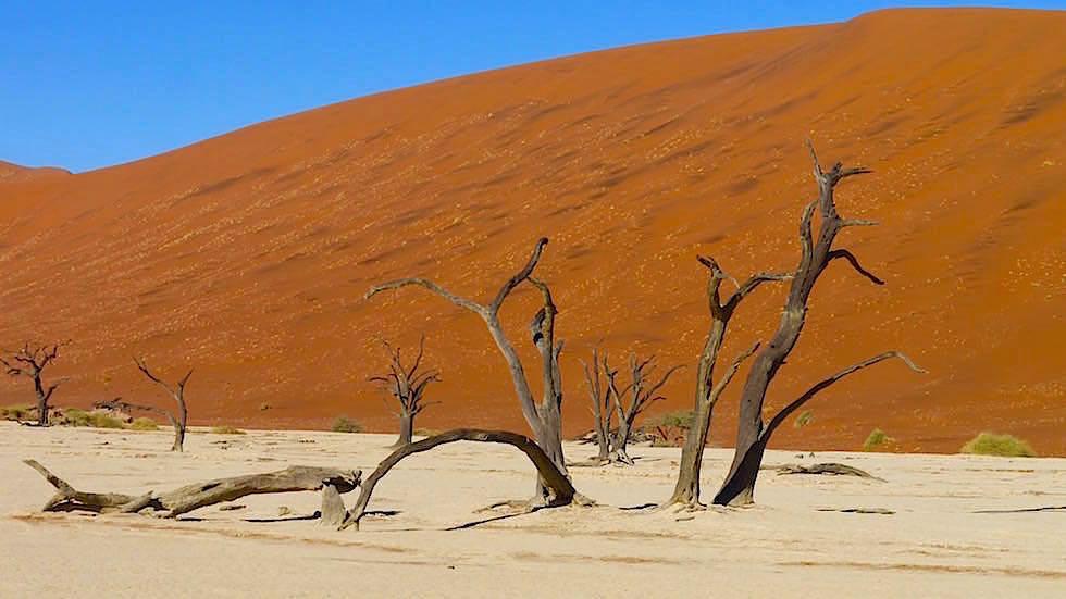 Deadvlei - Sanddünen in der Namib Wüste - Die schönsten Namibia Sanddünen - Afrika