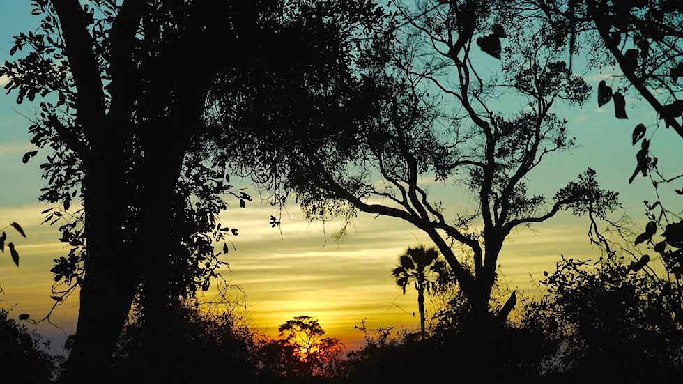 Okavango Delta - Sonnenaufgang im Moremi Wildlife Resort - Botswana Afrika