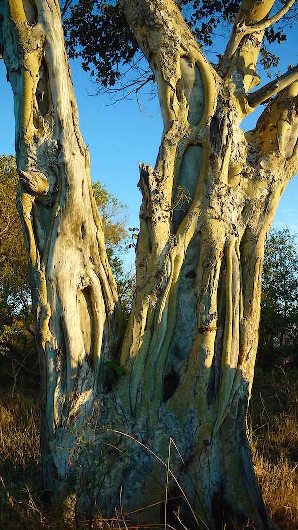 Okavango Delta - Moremi Wildlife Resort - Botswana Afrika