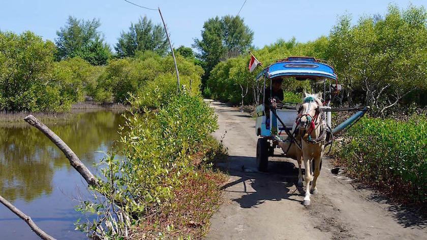 Gili Meno Highway mit Pferdekutsche