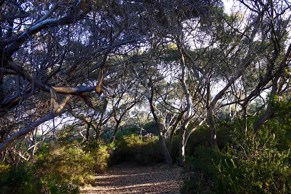 Vögel beobachten - Rossiter Bay - Cape Le Grand - Western Australia