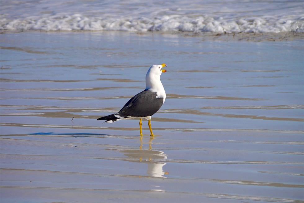 Wasservögel - Cape Le Grand - Western Australia
