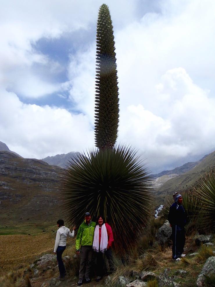 Nationalpark Huascarán mit Puya Raimundi - Huaraz - Peru