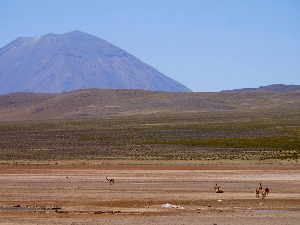Pampa Arrieros: Blick auf El Misti - von Arequipa nach Chivay zum Colca Canyon - Peru