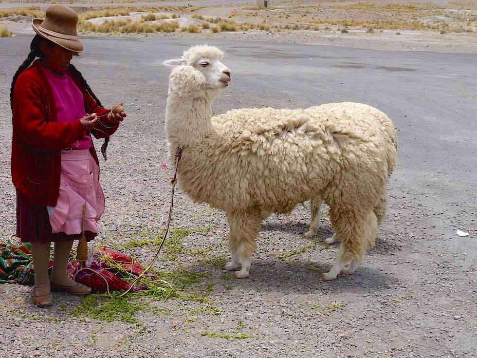 Frau mit Alpaka - Patahuasi - von Arequipa nach Chivay zum Colca Canyon Peru