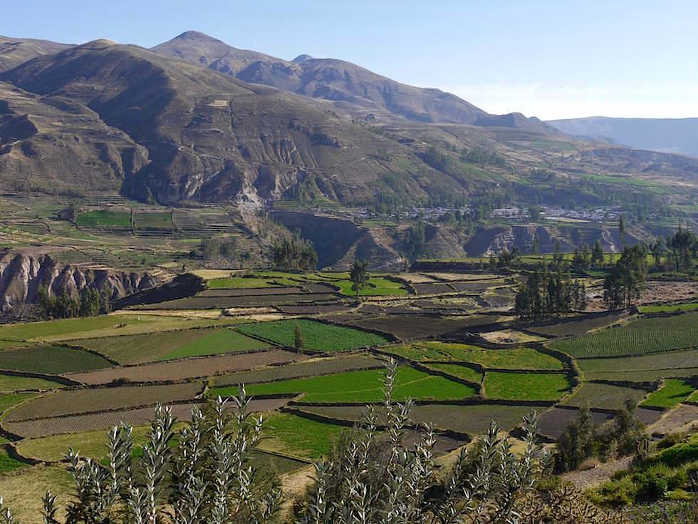 Terrassen auf dem Weg zum Cruz del Condor - Colca Canyon - Chivay- Peru