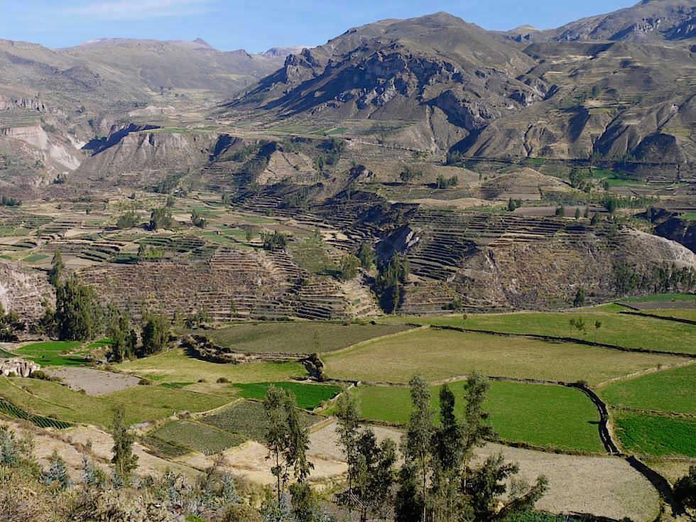 Colca Tal auf dem Weg zum Cruz del Condor - Colca Canyon - Chivay- Peru