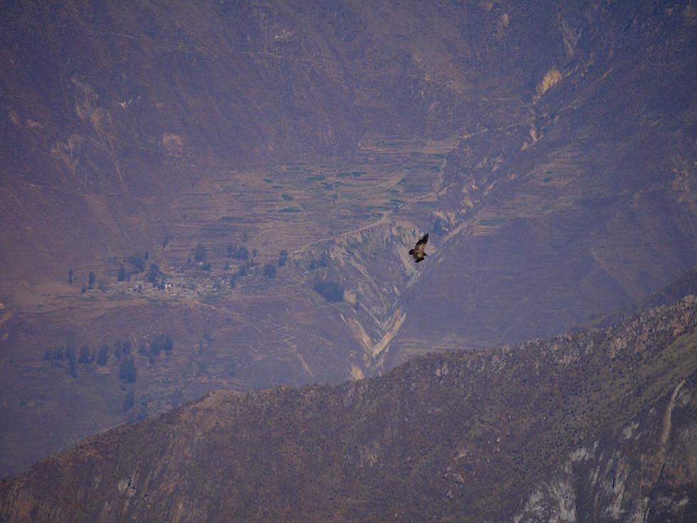 Kondore Kreuz des Kondors - Colca Canyon - Chivay- Peru