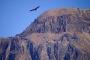 Colca Canyon – Das Tal der Kondore & zweit-tiefste Schlucht der Welt!