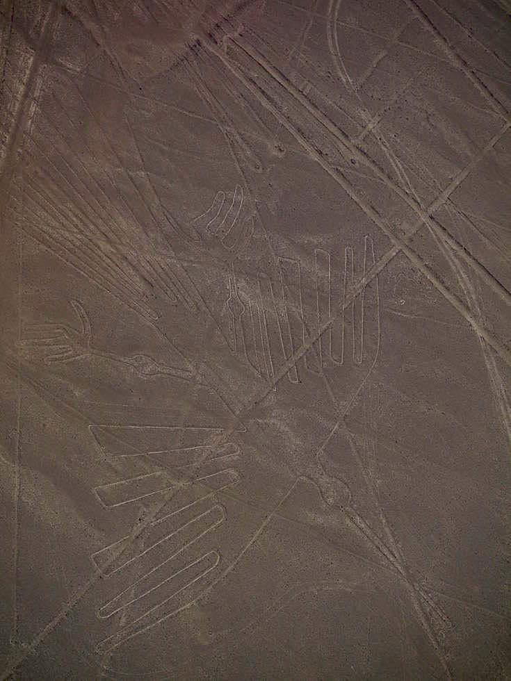 Kondor Nasca Lines Nasca Wüste Peru