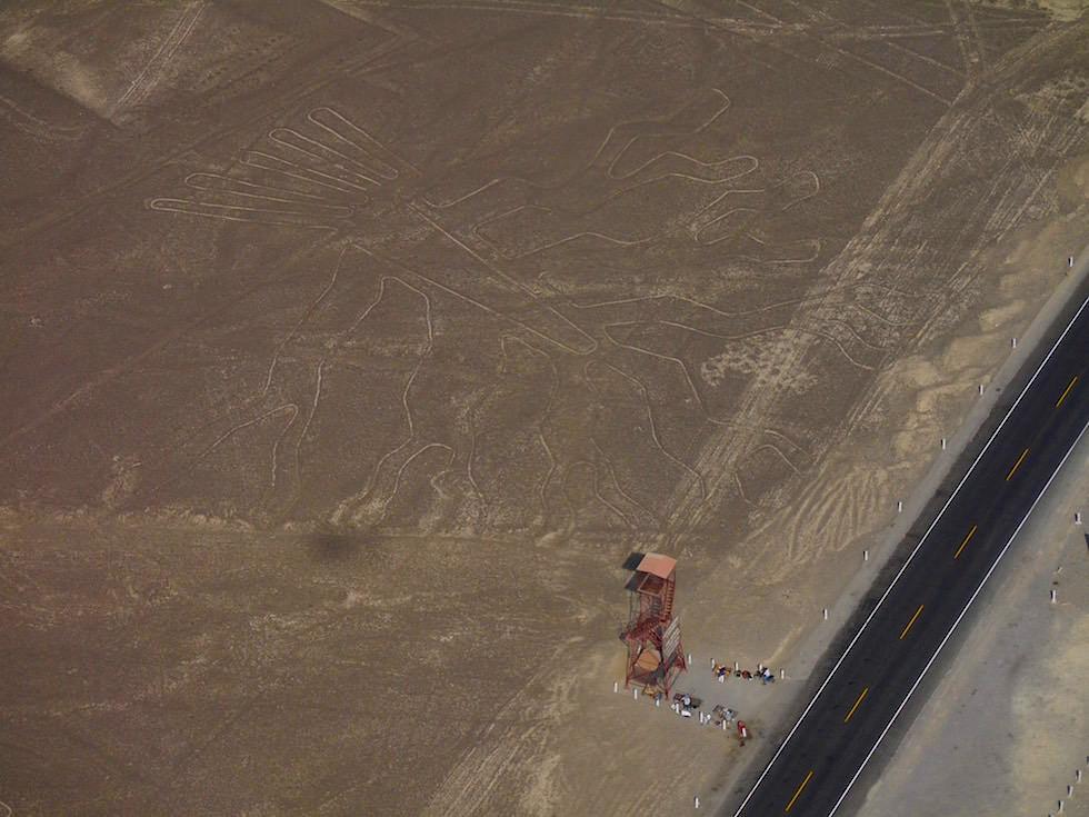 Baum Nasca Linien Nasca Wüste Peru