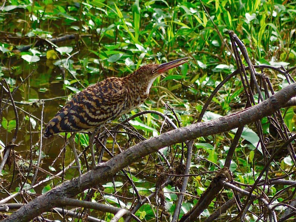 Vogel - Abenteuer Amazonas Dschungel Tour - Peru