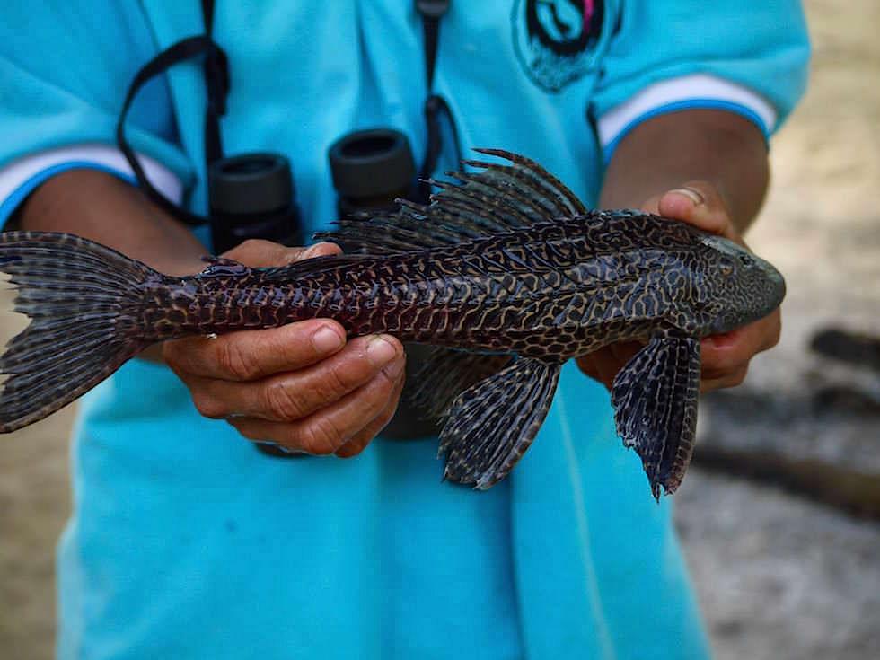 Fische - Abenteuer Amazonas Dschungel Tour - Peru