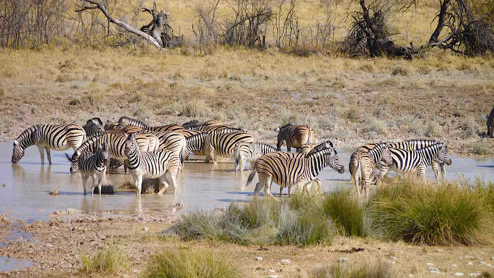 Wasserlöcher Etosha Nationalpark Namibia