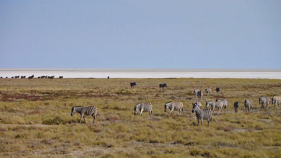 Etosha Pfanne Etosha Nationalpark Namibia