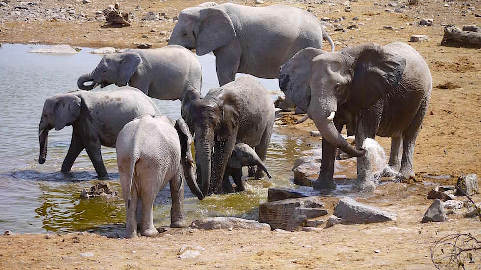 Elefanten Halali Camp Etosha Nationalpark Namibia