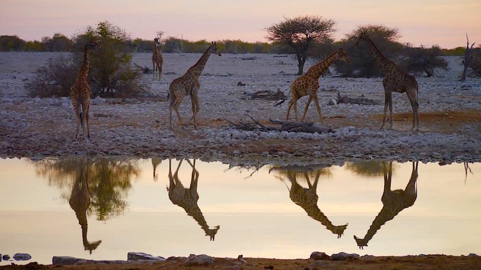 Dämmerung Wasserloch Okaukuejo Camp Etosha Nationalpark Namibia