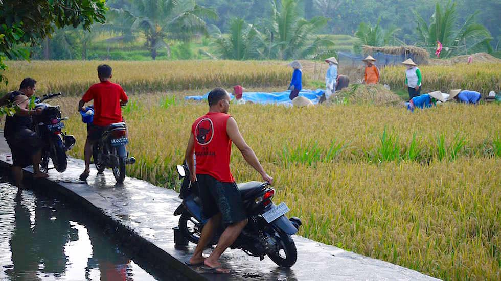 Feiertag Moped putzen - Von Ubud nach Lovina - Bali, Indonesien