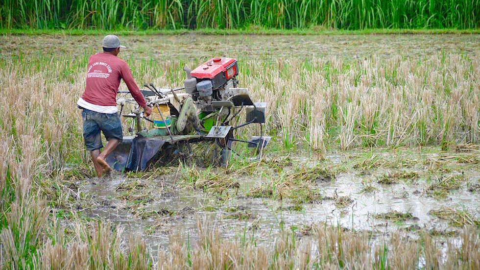 Feldarbeit - Von Ubud nach Lovina - Bali, Indonesien