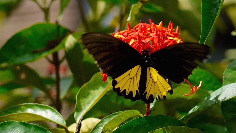 Bali Butterfly Park - Indonesien