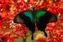 Bali Butterfly Park – Von Schönen, Schrecken & den Meistern der Tarnung! – Taman Kupu Kupu