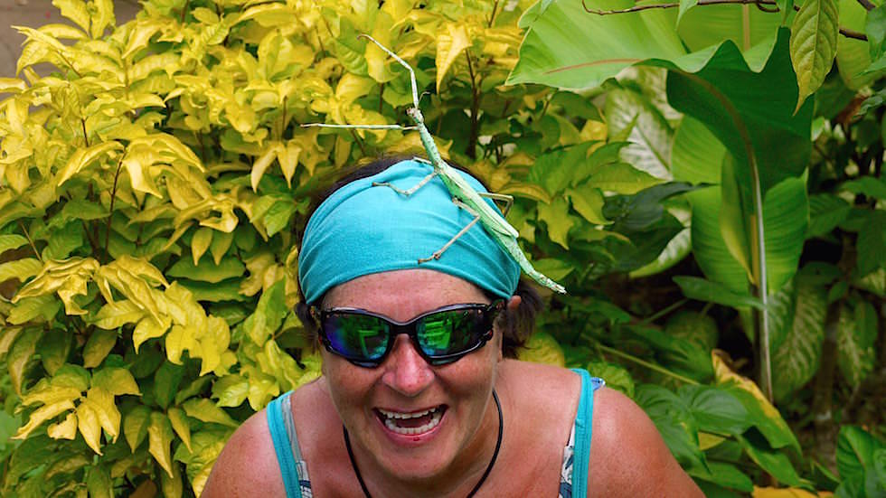 Wandelnde Äste - günen Riesen-Stabschrecken - Bali Butterfly Park - Indonesien