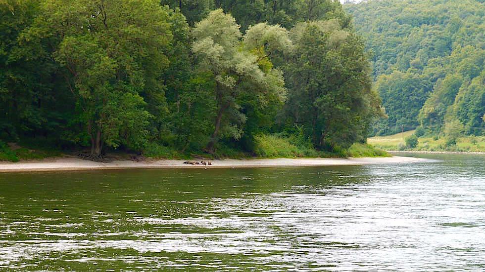 Ufer- Wanderung zum Donaudurchbruch - Weltenburger Enge bei Kehlheim Bayern