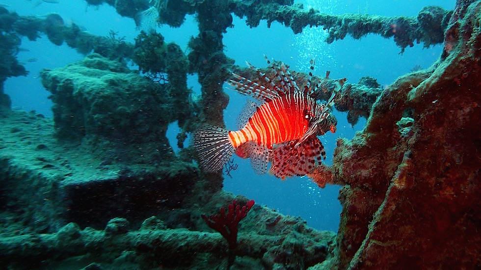 wrack tauchen Küste bei Amed Bali Indonesien