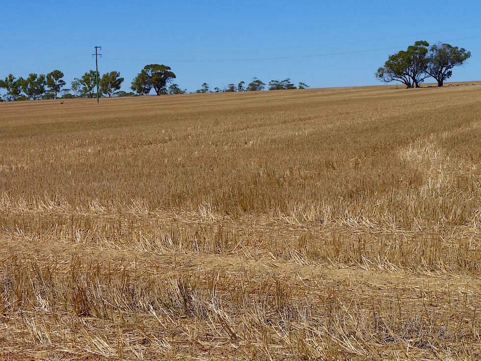 Wheat Belt bei Perth - Kalgoorlie - Western Australia