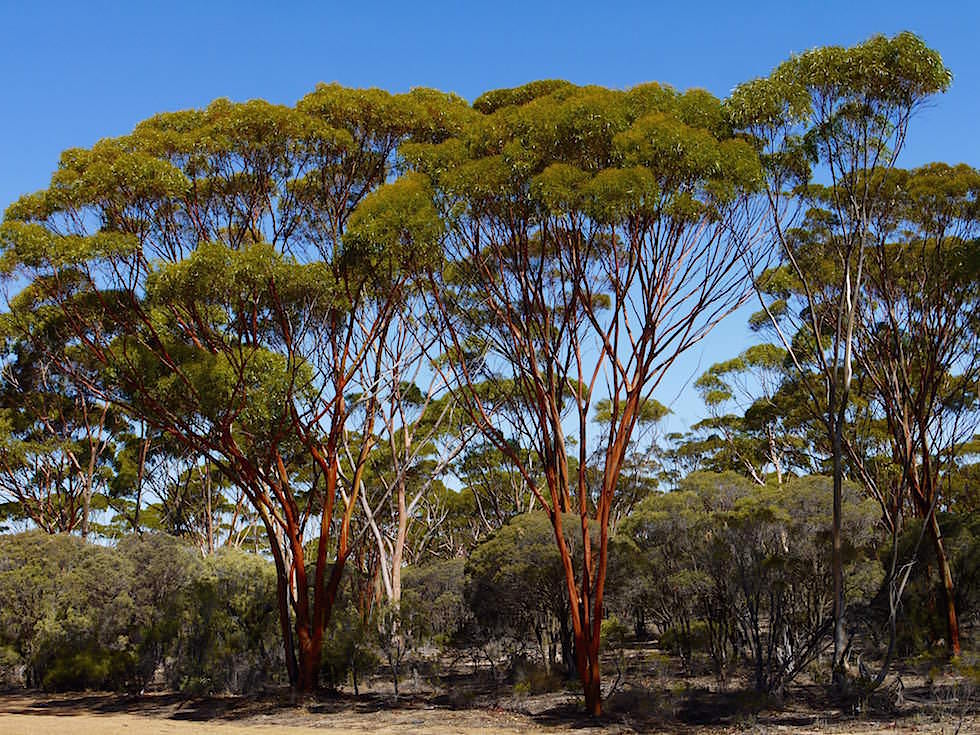 Von Kalgoorlie nach Esperance - Western Australia