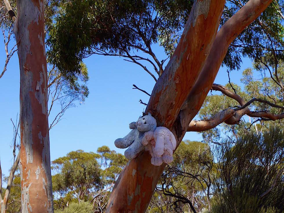 Plüschtiere an Bäumen Kalgoorlie - Western Australia