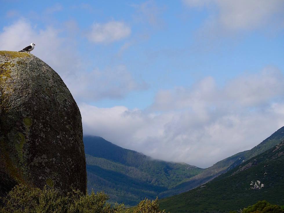Blick in die Berge - Wilsons Promontory National Park - Victoria
