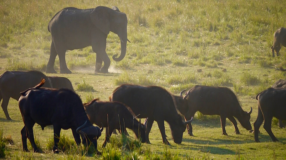 Chobe River Cruise - Chobe National Park in Botswana