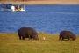 Chobe River Cruise – Eine einzigartige Bilderbuch-Fotosafari in die Abendsonne Afrikas!